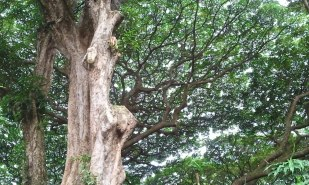Canopy of green