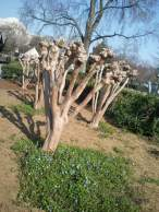 Hibiscus in the National Sculpture Garden