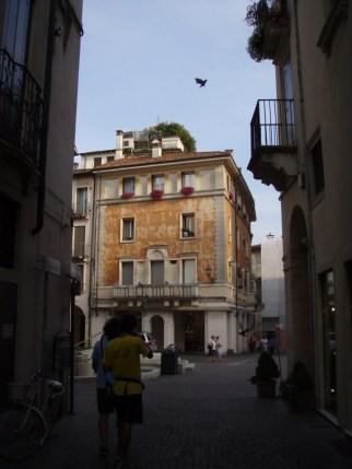 Vicenza Street with bird