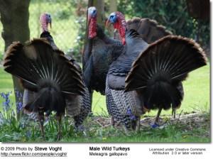 Mmmmm, Turkey!