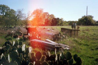 cacti in austin; flower-hunting
