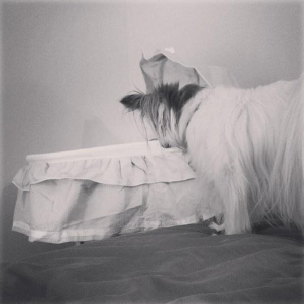Phoebe bassinet