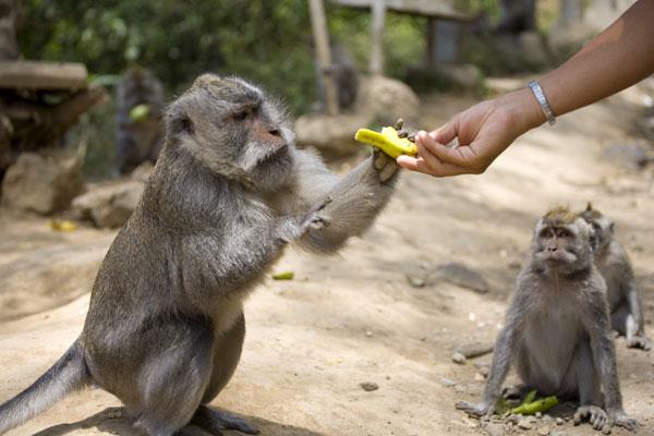 Foresta delle scimmie - Bali