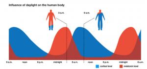 Het cortisol en melatonine niveau tijdens de slaap