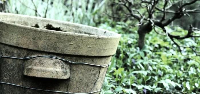 kotvičník zemný pestovanie zber