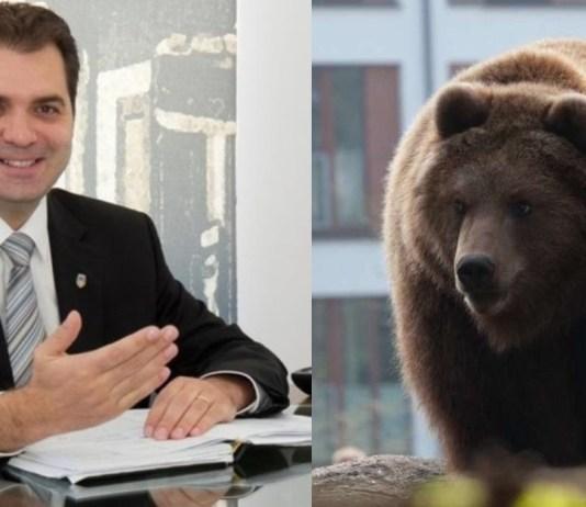 Antal Árpád medve