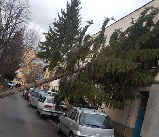Fát döntött a szél