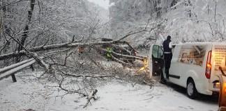 Úttestre dőlt fák | Fotók: Regionális Útügyi Igazgatóság