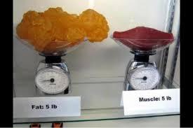 Muskler_og_fedt
