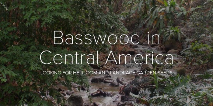 Basswood in Central America