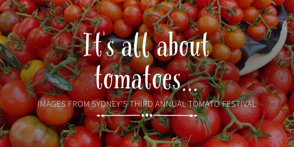 It's all about tomatoes…