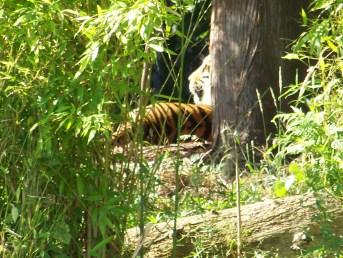 15 - Sumatra Sleep