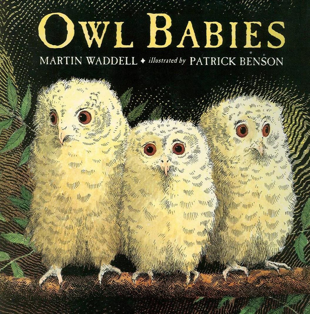 Owl Babies1 E