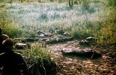 North Vietnamese Soldiers Lie Dead on the Morning of 13 May 1968