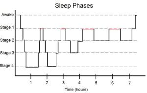 Simplified_Sleep_Phases