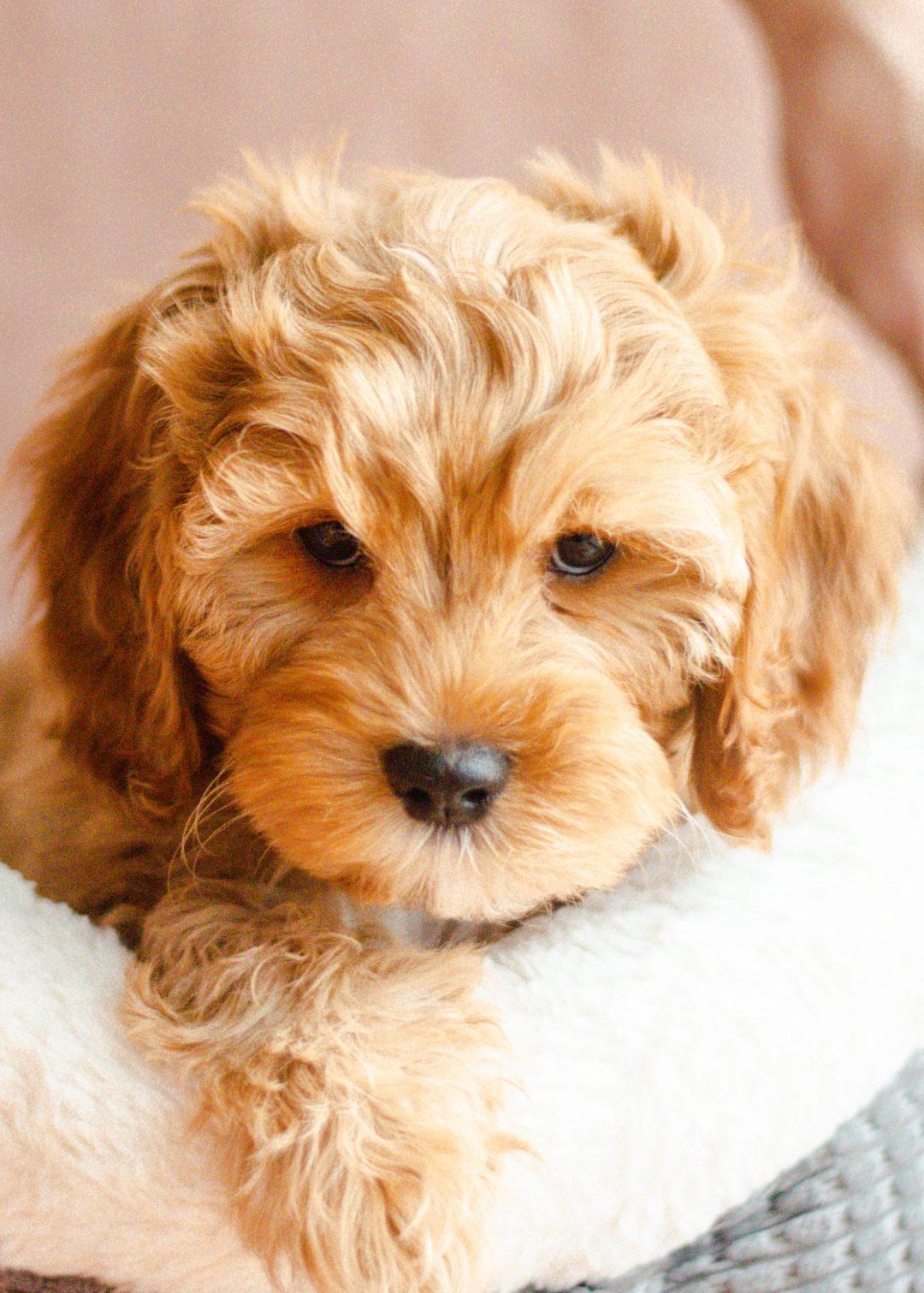 Dog Training Testiomonials