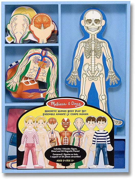 Magnetic Human Body Play Set