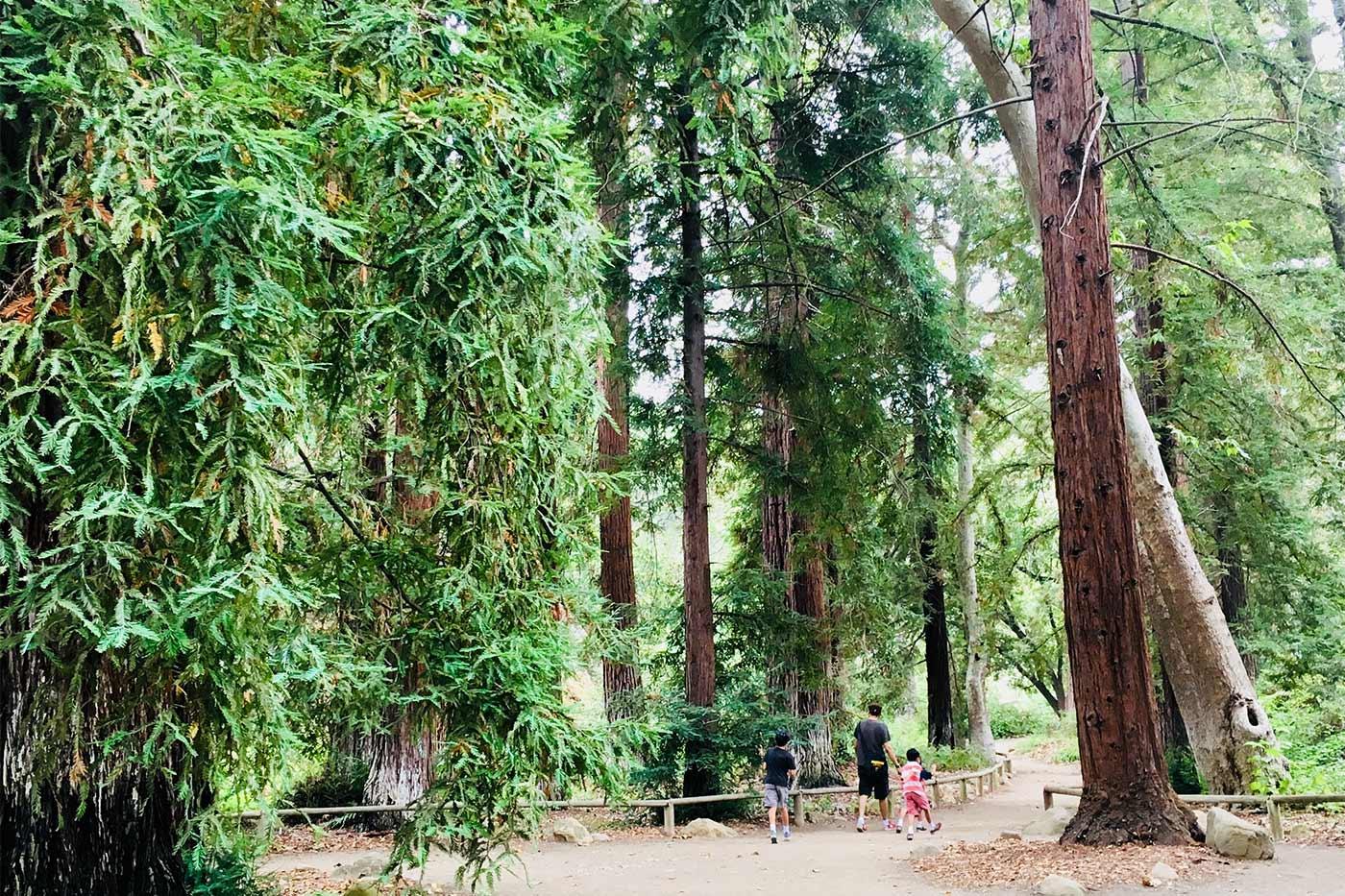 South Coast Botanical Garden
