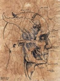 daemon_anatomy_by_exvanitas-d5x8kpz