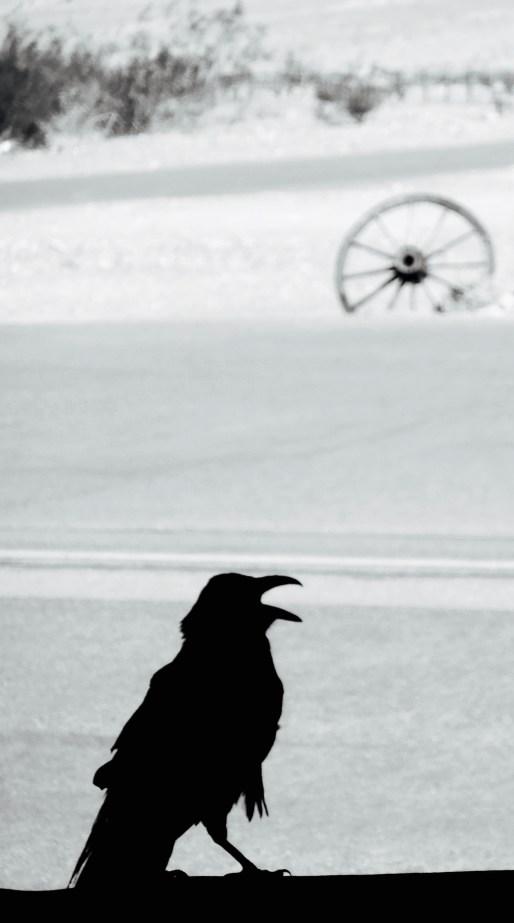 parched crow 2