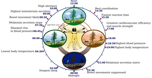 circadian rhythms entrain us to the light-dark cycles of our natural environment