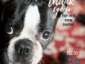 Dr. Eugene Sambataro wins Name That Dog contest
