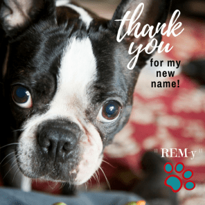 Introducing REM-y our newly named mascot!