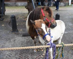 Paardenmarkt V'schoten (11)