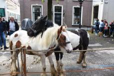 Paardenmarkt V'schoten (84)
