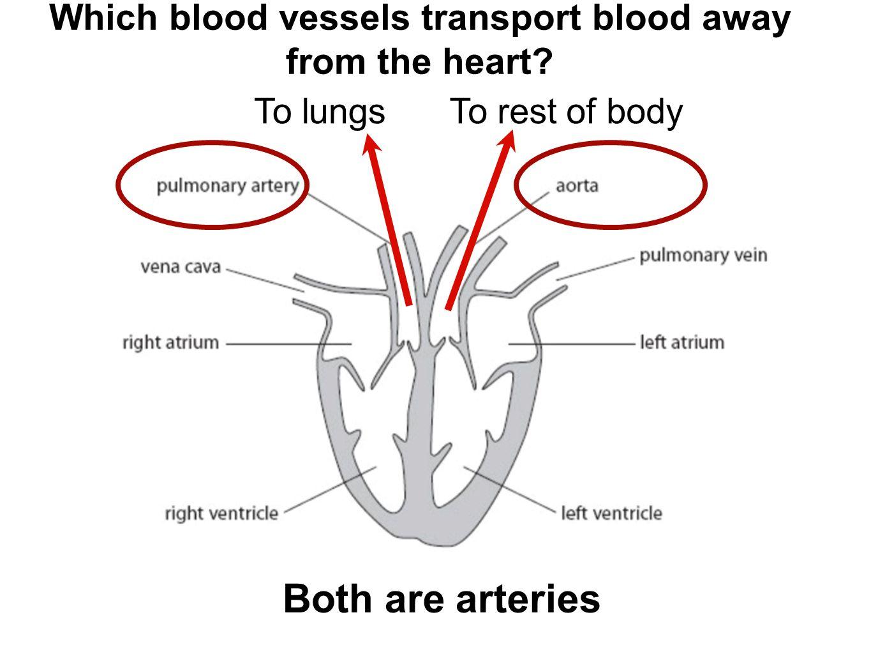 B2 Topic 3 Starter Stick In The Heart Diagram