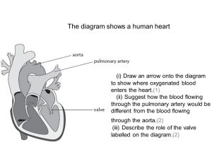 B2 Topic 3 Starter: Stick in the heart diagram  ppt video