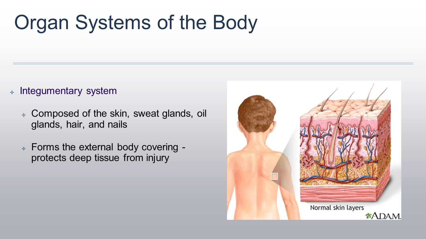 Unit 1 The Human Body An Orientation