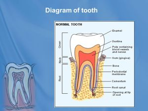 DENTAL PRODUCTS Course Title : Cosmetology Course No  ppt