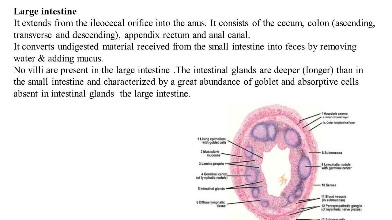Transverse Colon Fistula
