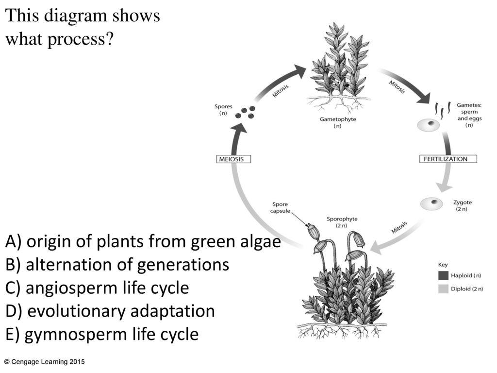Chapter 21 Plant Evolution