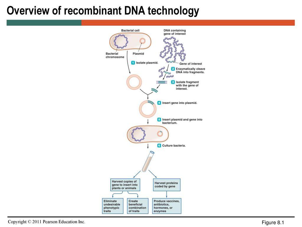 Microbiology Media Worksheet