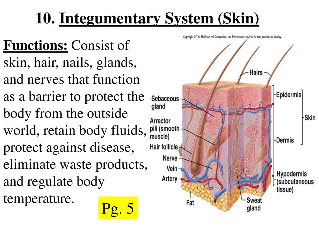 Topic Body Systems Pg Ppt Video Online Download