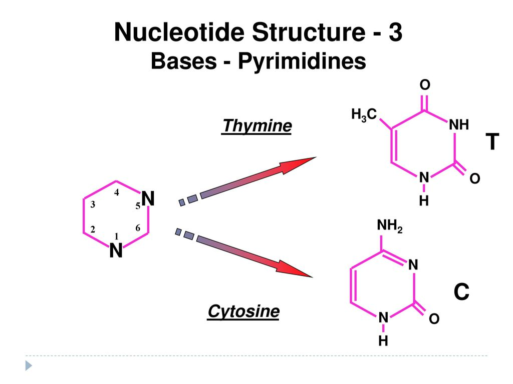 Nucleic Acids Dna Amp Rna