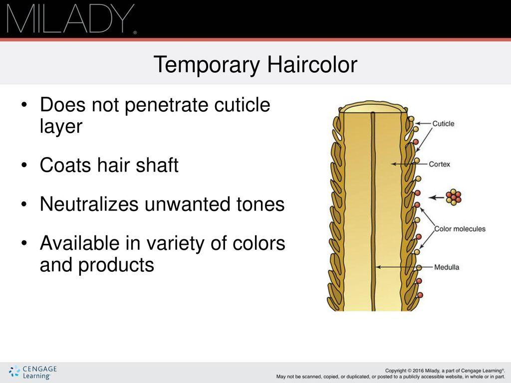 Chapter 21 Haircoloring