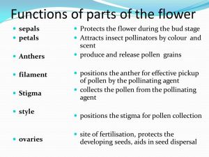 Sexual reproduction in plants  ppt video online download