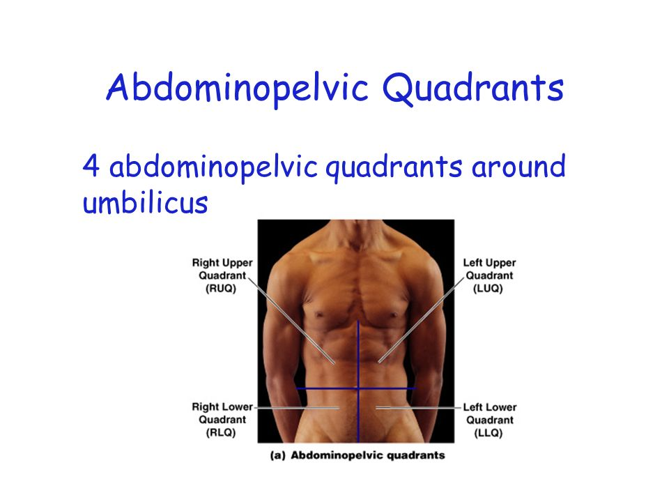 4 Abdominopelvic Quadrants And 9 Regions