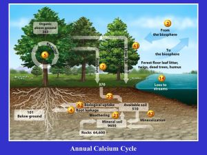 Chapter 5: The Biogeochemical Cycles  ppt video online