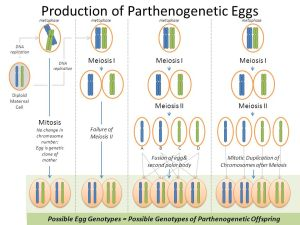 Robin Wright Primer on Parthenogenesis & some other