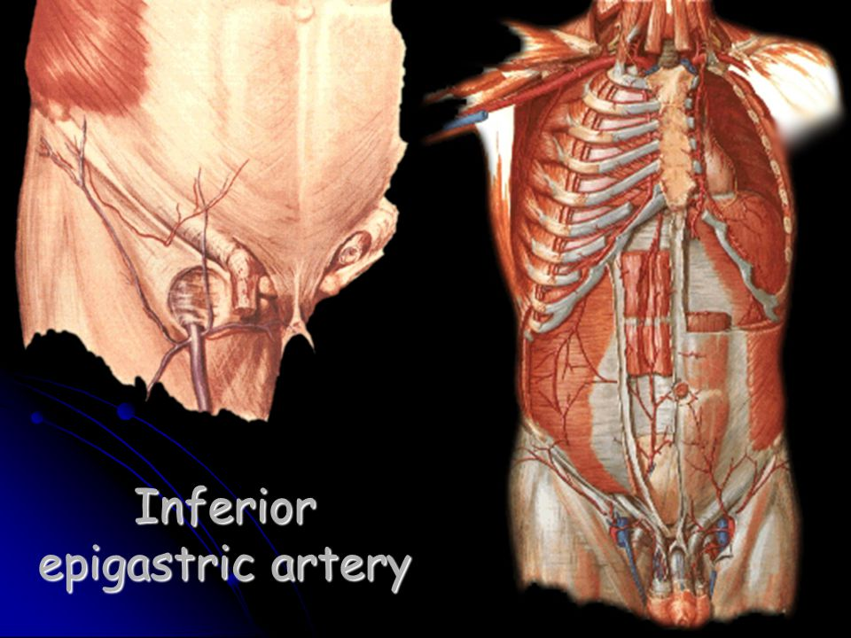 Fine Lateral Femoral Cutaneous Nerve Anatomy Image Collection ...