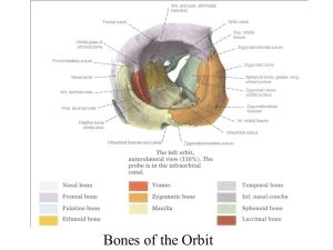 Overview of Structure of the Adult Skull  ppt download