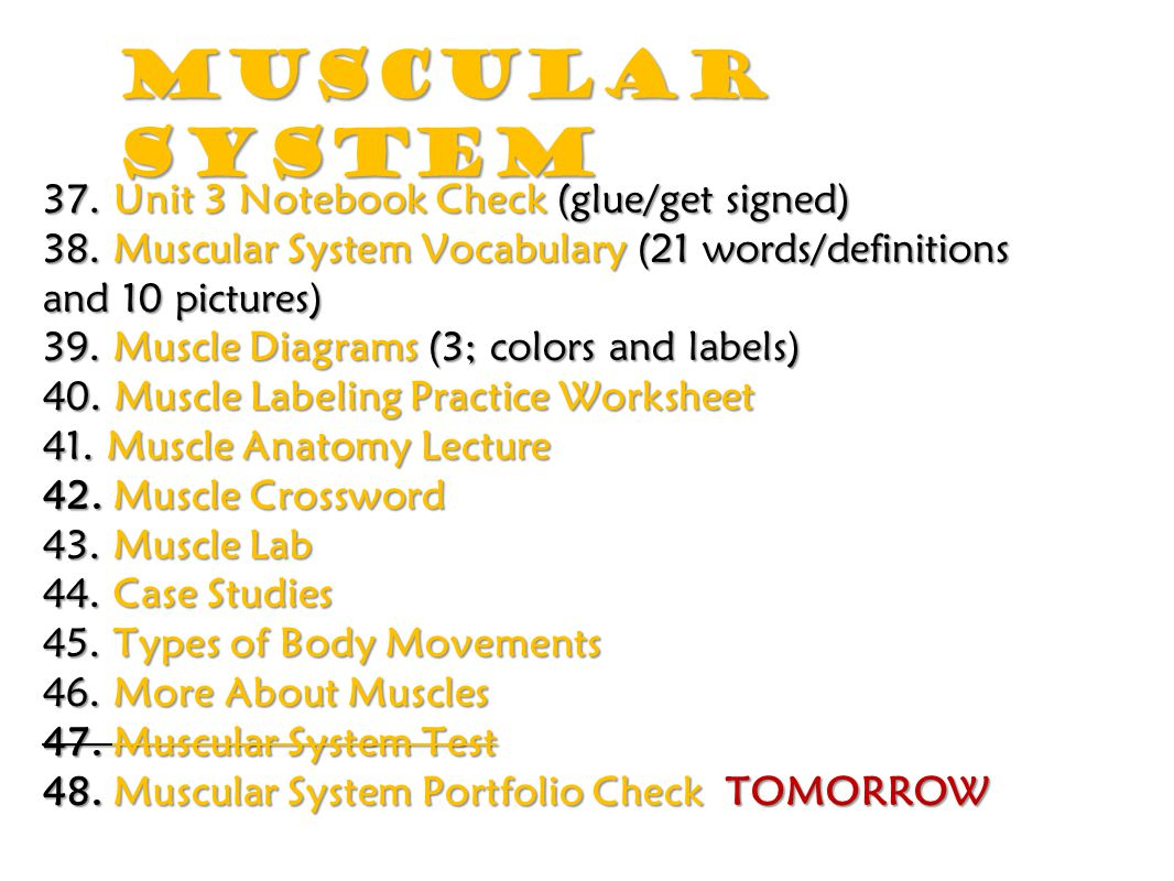 Muscular System 37 Unit 3 Notebook Check Glue Get Signed