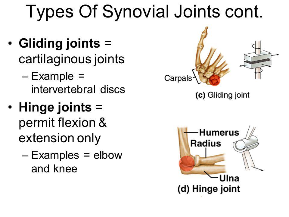 Skeletal System Hinge Joint