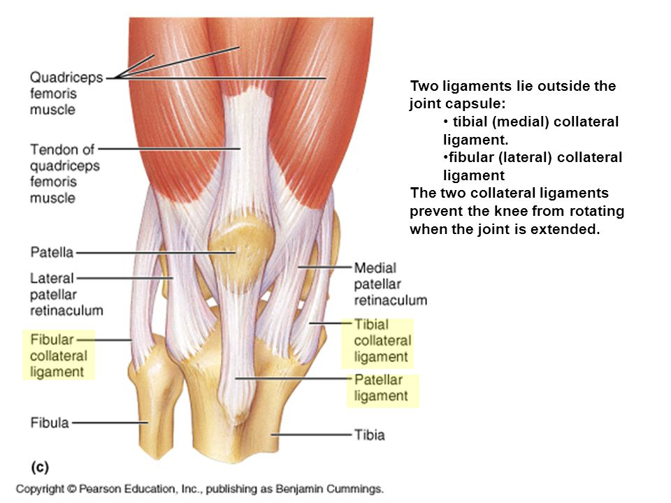 Fibular Collateral Ligament Pain