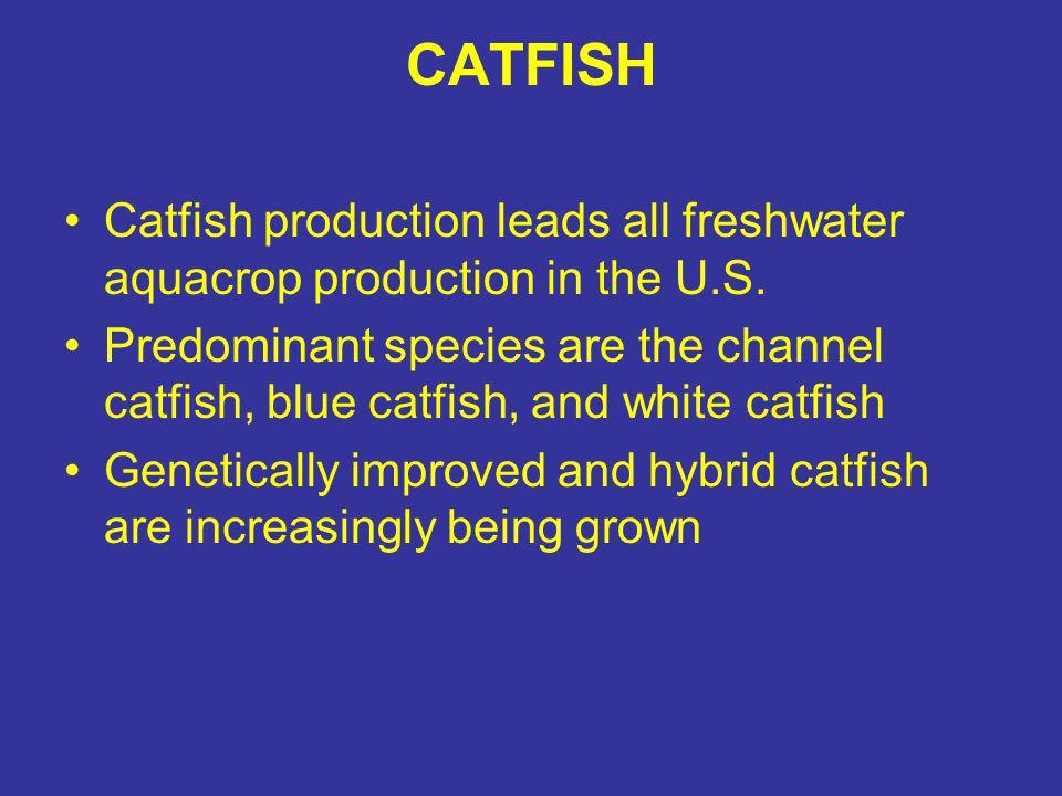 Catfish Farm Ponds