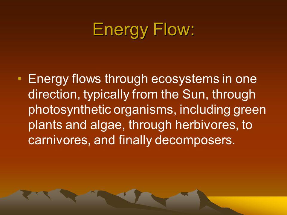 Energy Pyramid Including Decomposers